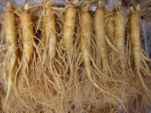 Le ginseng : une plante médicinale anti-fatigue