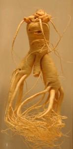 Ginseng - A 'Little Man' et un puissant aphrodisiaque