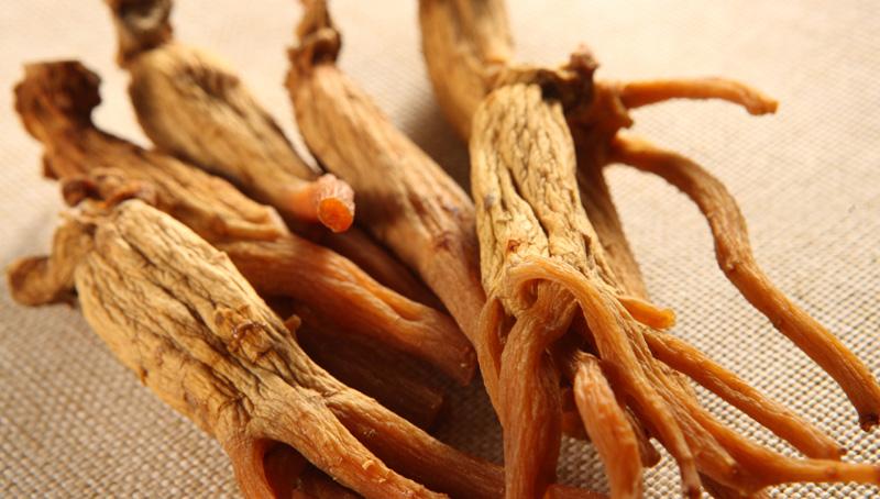 En grecque, le terme Panax signifie « remède universel ».